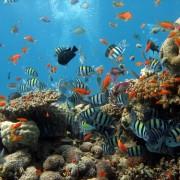 c171cshutterstock_2504857--Bir-mercan-kolonisi