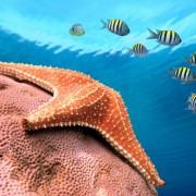 c868fshutterstock_87803644--denizyildizi-ve-baliklar-Karayip-denizi