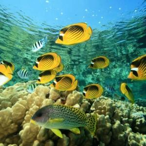 d0521shutterstock_57785134--Bir-mercan-kayaligi-uzerinde-baliklar,-Kizil-deniz