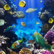 d128dshutterstock_82387129--Bir-mercan-kayaligi-uzerinde-tropikal-baliklar