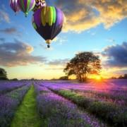d1d69shutterstock_85726867--Lavanta-tarlalari-uzerinde-ucan-hava-balonlari,ingiltere