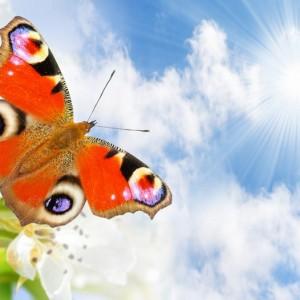 d32b0shutterstock_96841588--Bulutlu-gokyuzu-ve-ucan-kelebek
