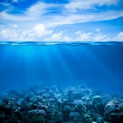 d7ddcshutterstock_118133950---Sualti-mercan-kayaligi,-deniz-tabani-gorunumu