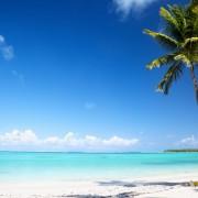 dc967shutterstock_41542642--Okyanus-ve-palmiye
