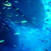df211shutterstock_133636736---Mavi-deniz-alti-ve-balik-gruplari