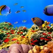 ea812shutterstock_76544065--Resif-mercan-kolonisi,-Misir