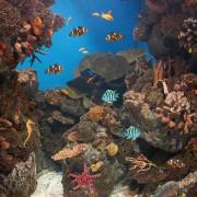 ee22eshutterstock_86159929-Deniz-icerisinde-renkli-baliklar