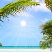 f0e74shutterstock_59568859--Mavi-gokyuzu-ve-palmiye-agaclari