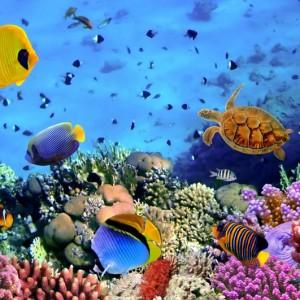 f3512shutterstock_75882247--Bir-mercan-kolonisi,-Kizildeniz