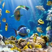 f5937shutterstock_86040520-Bir-mercan-kayaligi-uzerinde--tropikal-baliklar
