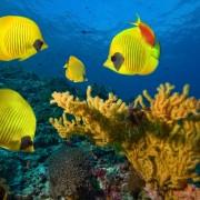 fca90shutterstock_87390989--mercan-kolonisi