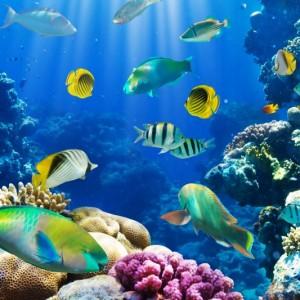 fd8afshutterstock_72261667--Bir-mercan-kayaligi-uzerinde-tropik-baliklar